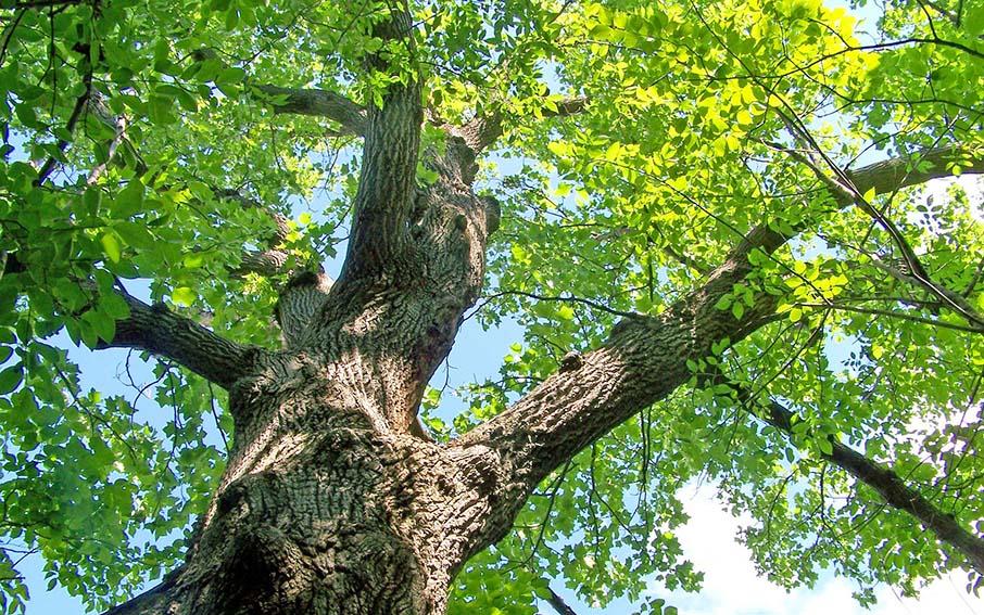 Quercia - Patrimonio forestale regionale